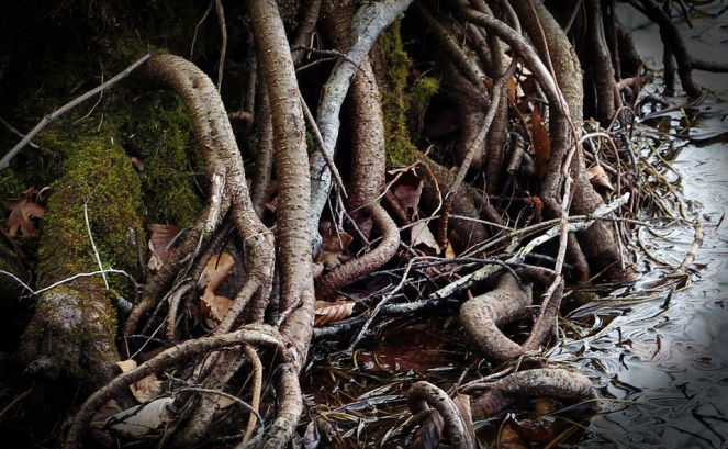 root-326552_960_720.jpg